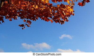 orange, ciel bleu, feuilles