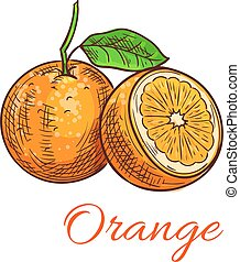 Orange. Citrus fruit sketch icon. Vector isolated whole and half cut juicy orange with stem and leaves. Element for juice, jam, drink label sticker design