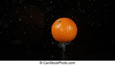 Orange, citrus sinensis, Fruit Falling on Water against Black Background, Slow Motion 4K