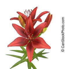 Orange color lily