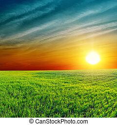 orange, coucher soleil, sur, champ vert