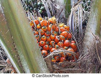 orange)., dłoń, źródło, mankind., zrównoważony, owoc, ...