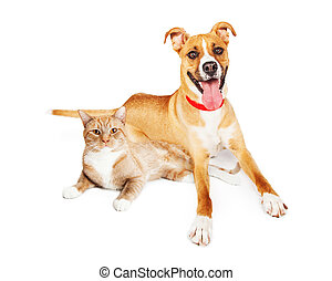 Orange Dog and Cat Laying Together
