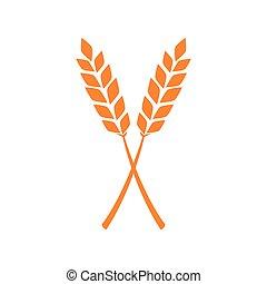 Orange ears of wheat. Vector illustration on white isolated background