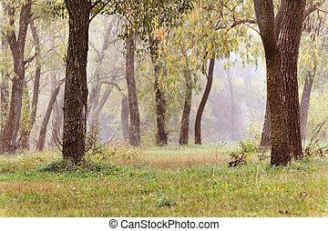 orange, espace, forest., paysage, copie, jaune, matin, printemps, leaves., automne, brumeux