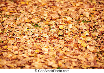 Orange fallen autumn leaves background. Shallow depth of field