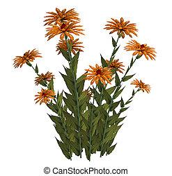 Orange Fantasy Flowers - Orange fantasy flowers on a white...