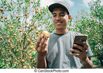 Portrait of a male farmer checking the condition of his oranges and noted with cellphone in an orange tree field