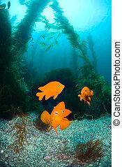 Orange fish on ocean reef
