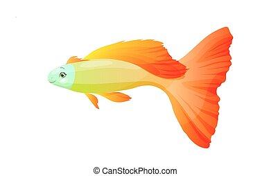 orange fish, vector isolated