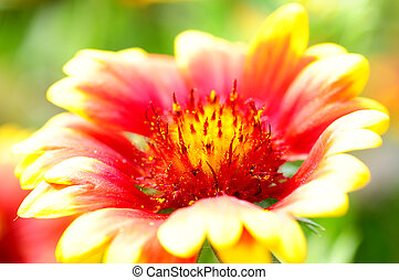 orange, fleur rouge