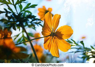 orange, fleur tropicale
