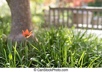 Orange Flower and Blurred Bench