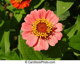 Orange Flower Bloom in a Green Garden