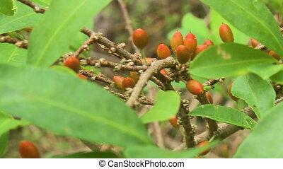Orange Flower Buds on Twig - Handheld, close up shot of...