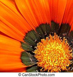 Orange flower. close-up