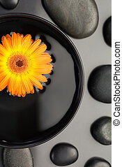 Orange flower floating in a bowl surrounded by black pebbles