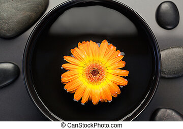 Orange flower floating in a bowl surrounded by black stones