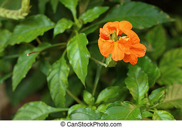 Orange flower in a nature at the park.