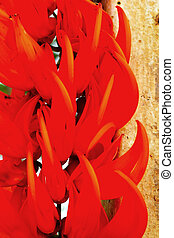 Orange flower in the nature