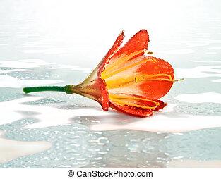 Orange flower in the snow