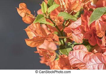 orange flower in the vase