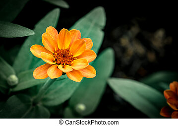 Orange flower on green leaves