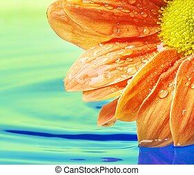 Orange flower reflected in water