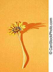Orange flower studio shot