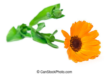 orange flower with a green branch