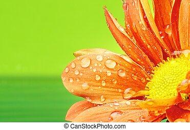 Orange flower with water drops on it