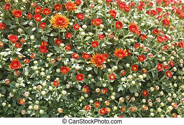 Orange Flowers Budding in Spring