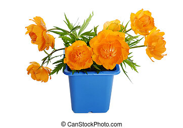 Orange flowers in a flower pot