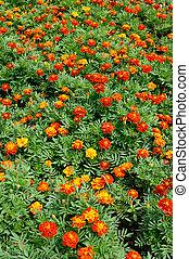 Orange flowers in garden background
