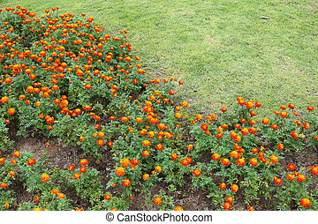 orange flowers in green grass garden