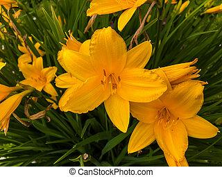 Orange Flowers In Green