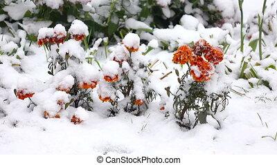 Orange flowers with snow 2