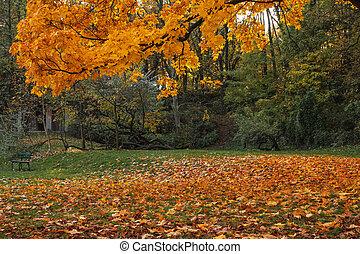 orange foliage in the autumn park