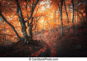 Orange forest with trail in fog in autumn. Colorful landscape