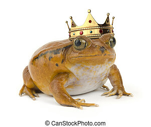 Orange Frog - Orange tropical frog wearing a crown on a...