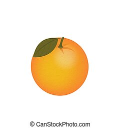 orange, fruit, citrus vector isolated on white background