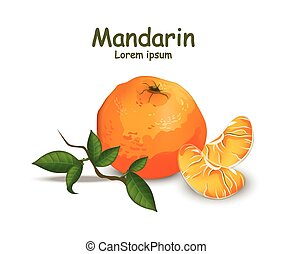 Orange fruit isolated on white background Vector illustrations