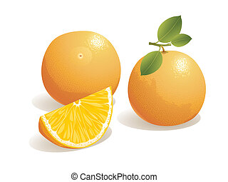 Orange Fruit - Realistic vector illustration of an orange ...