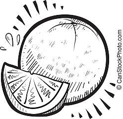 Orange fruit sketch