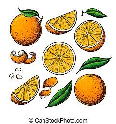 Orange fruit vector drawing. Summer food engraved illustration Isolated hand drawn slice, whole and half orange