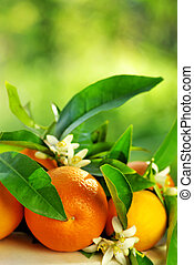 Orange fruits and flowers. - Orange fruits, green leaves and...
