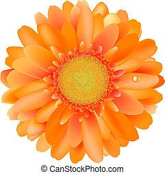 Orange Gerber, Isolated On White Background, Vector...