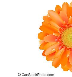 Orange Gerber With Water Drop