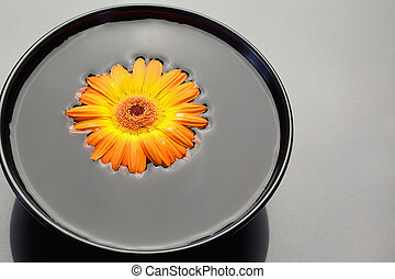Orange gerbera floating in a black bowl