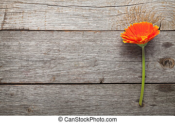 Orange gerbera flower on wooden table background with copy...